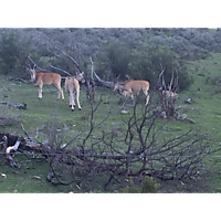 Fairy Glen Game Reserve image