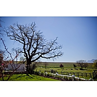Under Oaks Wine Farm image