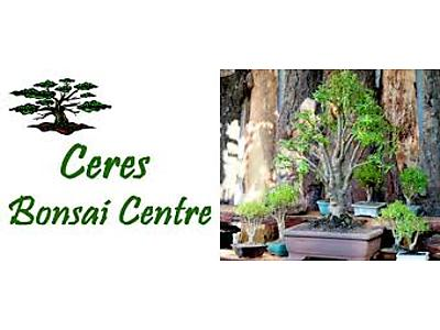 bonsai.jpeg - Ceres Bonsai image